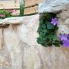 פעמוניות בגינה ואפליקציית מד אור לצמחי בית: חובת שיתוף למען האנושות!